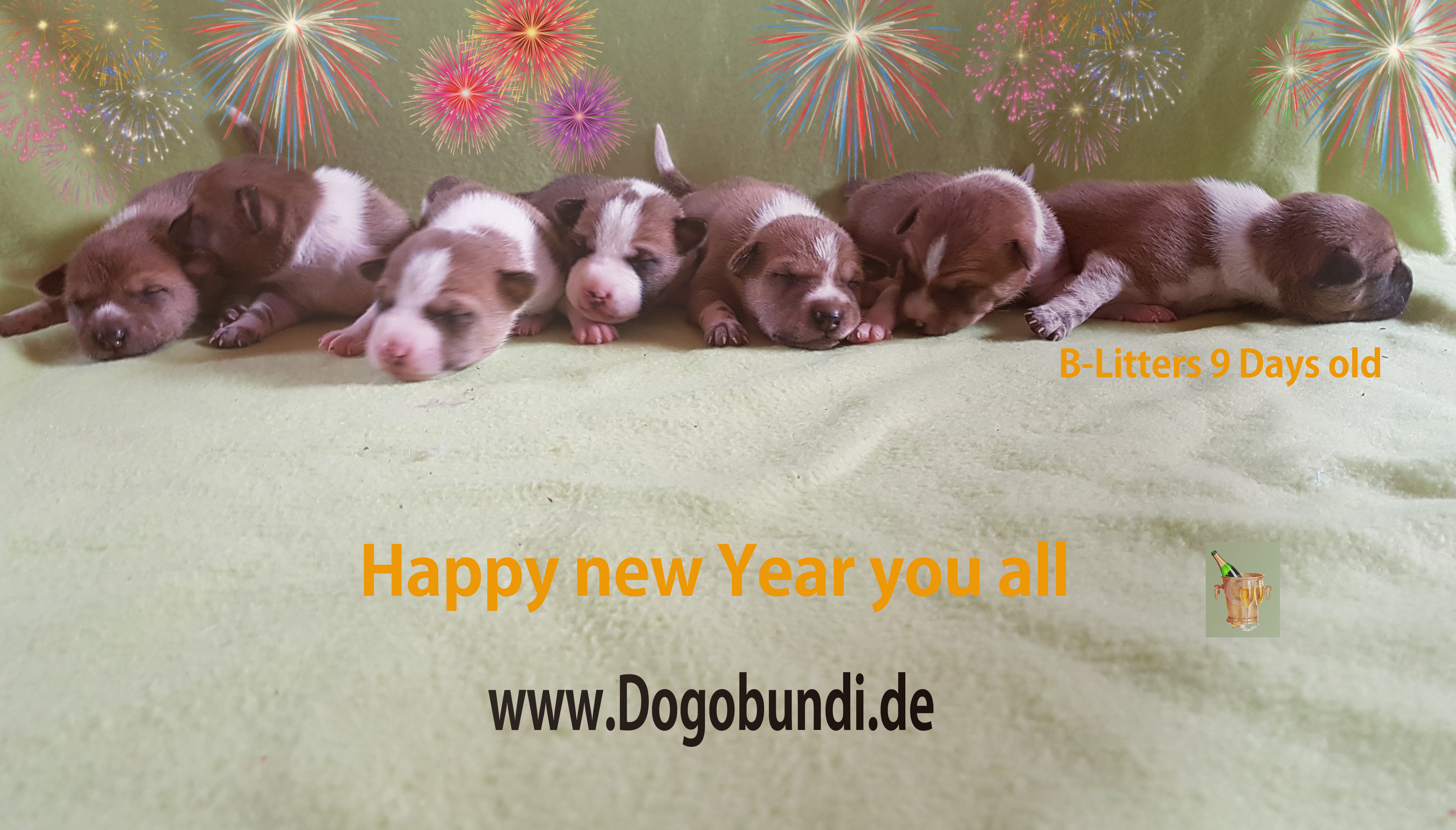 Basenji happy new year
